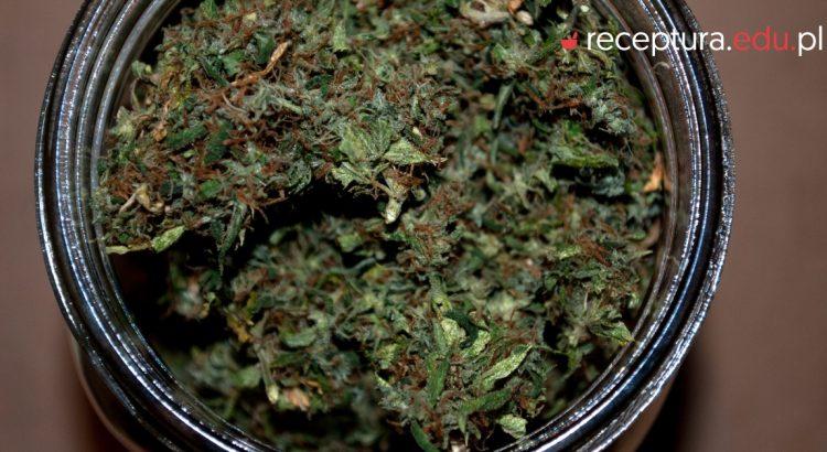 ziele konopii ustawa o przeciwdziałaniu narkomanii